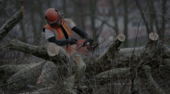 Waxahachie Tree Service
